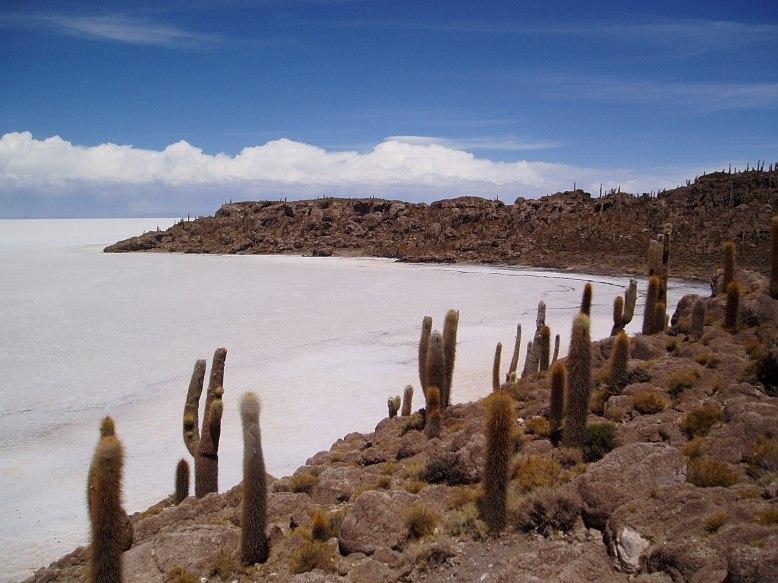 Fish Island- Full of Cacti