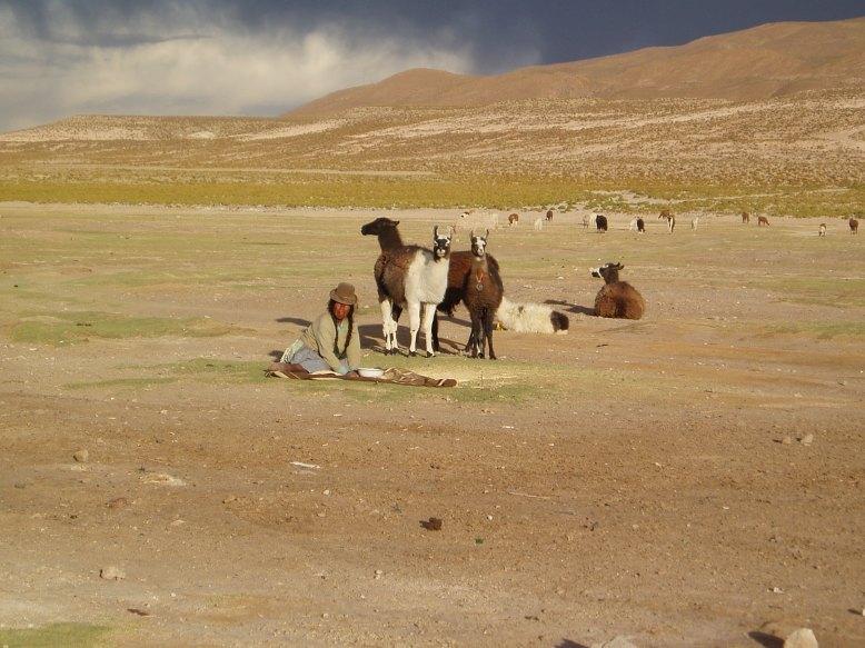 San Juan Rosario- A lady and her llamas