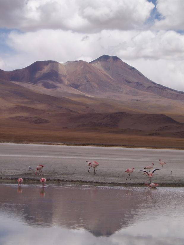 Chiarkota Flamingos- A Closer View