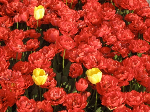Red tulips and a couple of yellow flowers mixed in