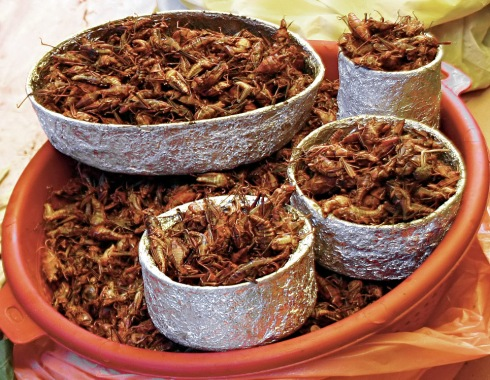 Bowls of chapulines (Photo courtesy of Wikipedia Commons, via Meutia Chaerani and Indradi Soemardjan)