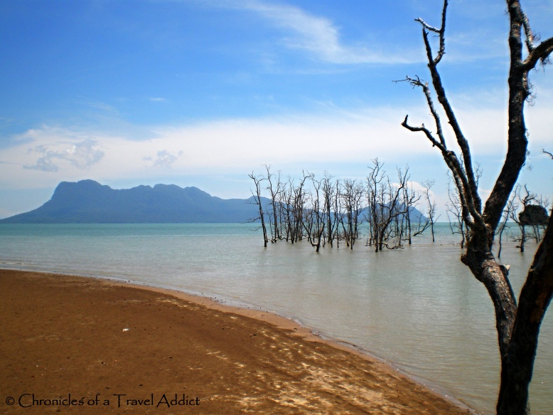Bakko National Park in Sarawak, Borneo. A vision arriving, an illusion leaving.