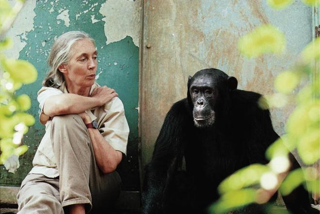 Jane Goodall with Freud- Photo via disunplugged.com