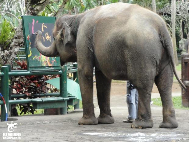 Elephant Exploitation