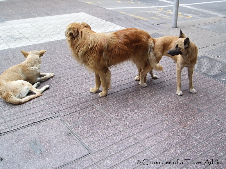 Stray dogs... err... mingling in the streets of Santiago, Chile