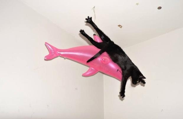cat-shark