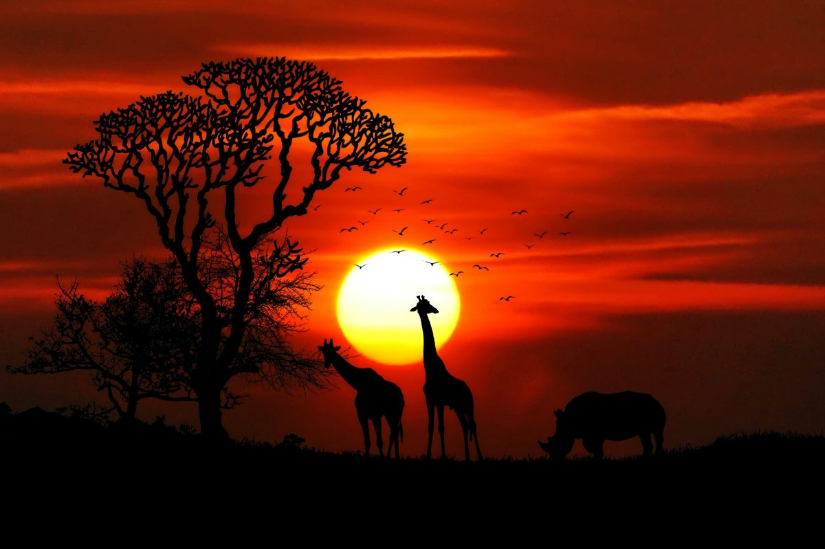 Top 7 African Safari Destinations